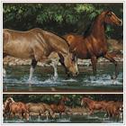 Dzikie konie - 84,00 zł