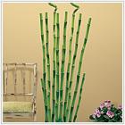Bambus - 139,00 zł