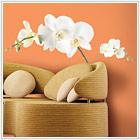 Biała orchidea - 139,00 zł